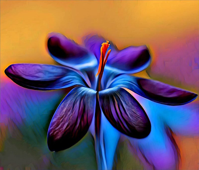 Blue and orange abstract flower