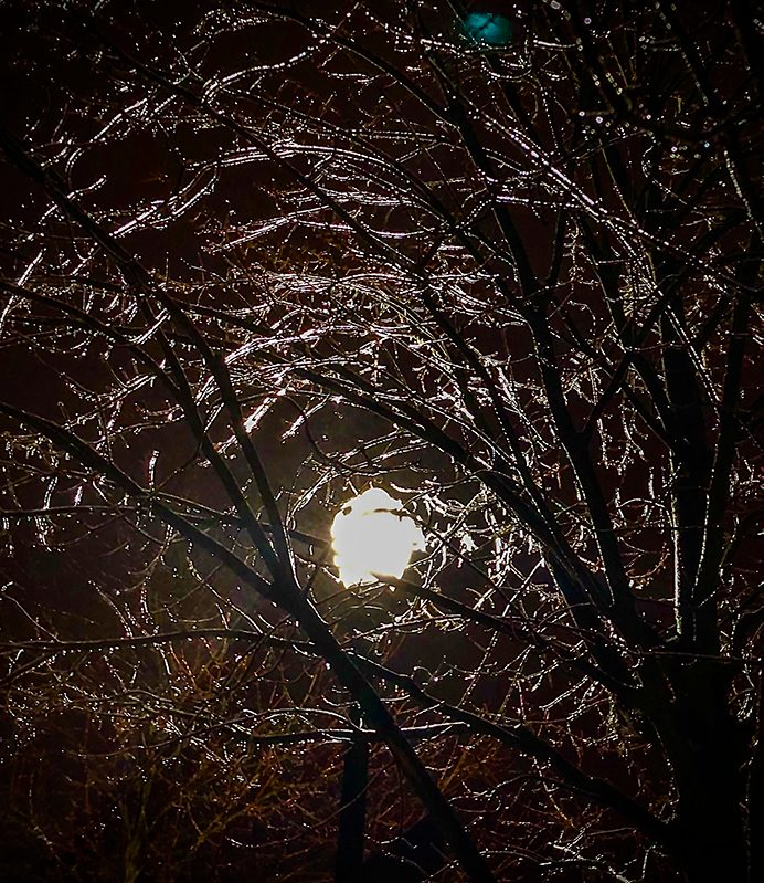 icy branches with full moon in october