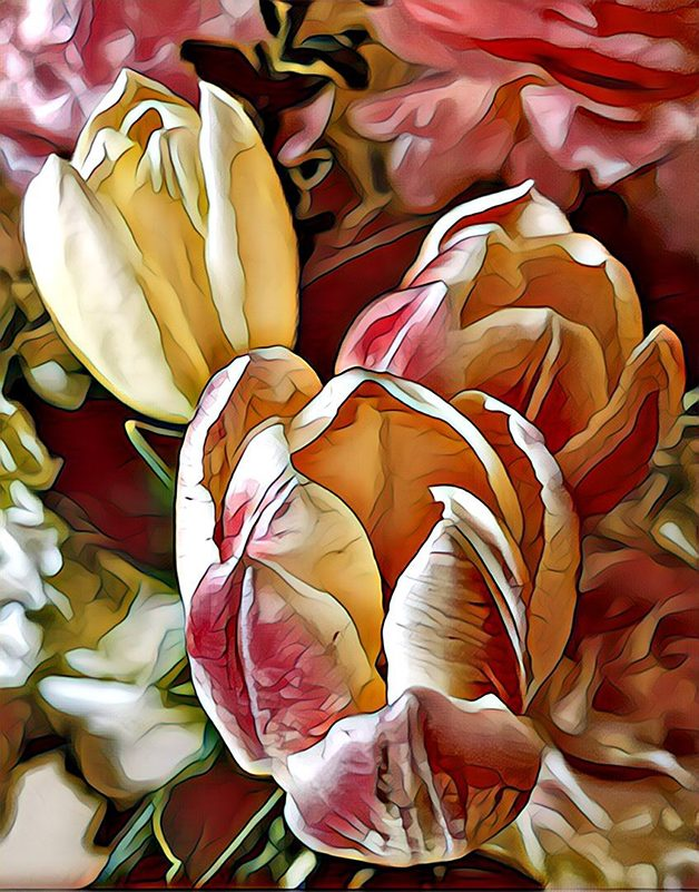 White and pink tulips