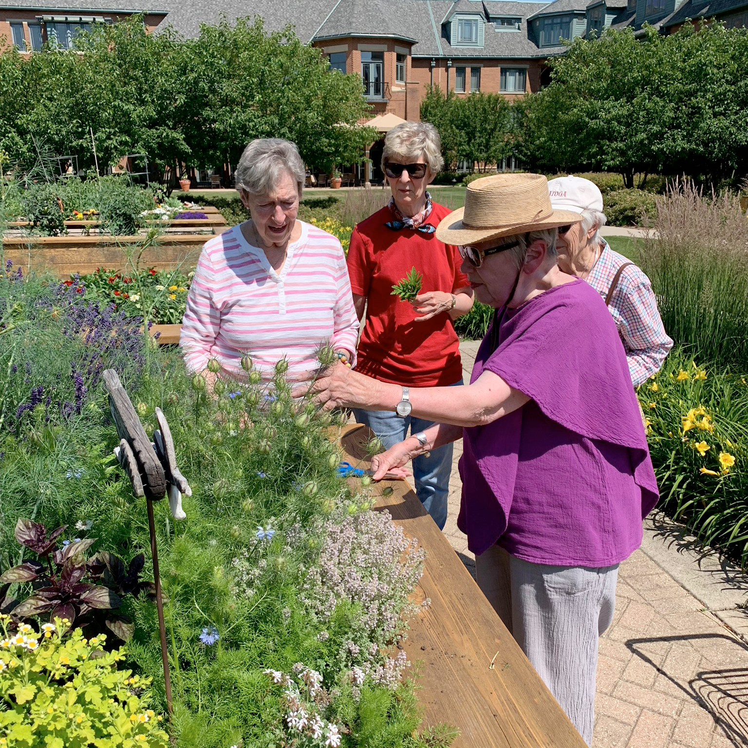 Avid gardeners tend to the many raised beds at The Garlands.